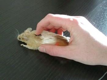 Repair Computer Mouse Scroll