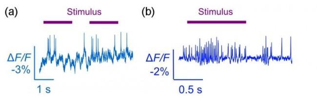brain activity sensors