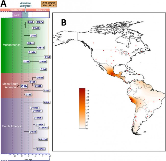 Inca Mummy Mitochondrial DNA tracking geographic map