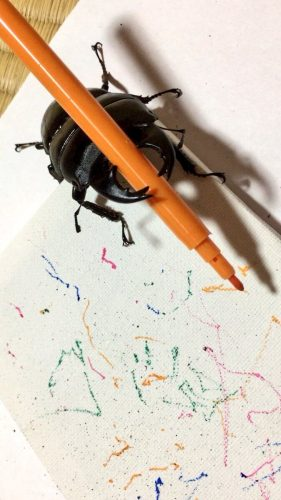 Spike the Beetle