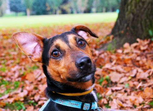 Dog, Brown, Snout, Dog Collar, Ear, Sitting, Nature
